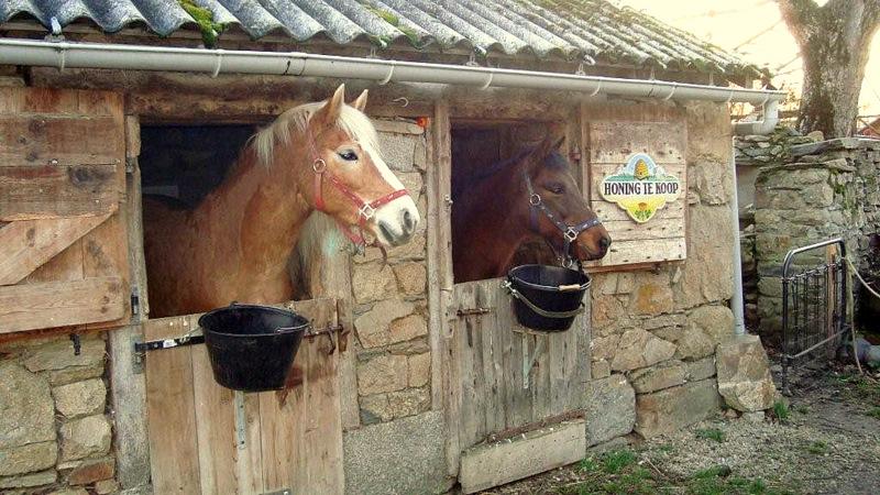 Paard mee op vakantie for Paard aan huis te koop